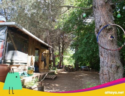 Permakamp Ekolojik Çocuk Kampı